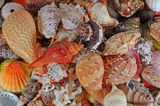 Free Assorted Colorful Seashells Stock Image - 7938881