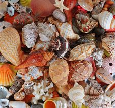 Free Assorted Colorful Seashells Royalty Free Stock Photography - 7938977