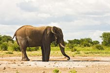 Free Elephant Stock Photography - 7939132