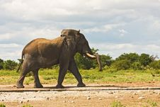 Free Elephant Stock Image - 7939281