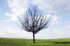 Free Alone Tree Stock Images - 7939404