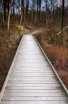 Free Wooden Forest Bridge Stock Images - 7939444