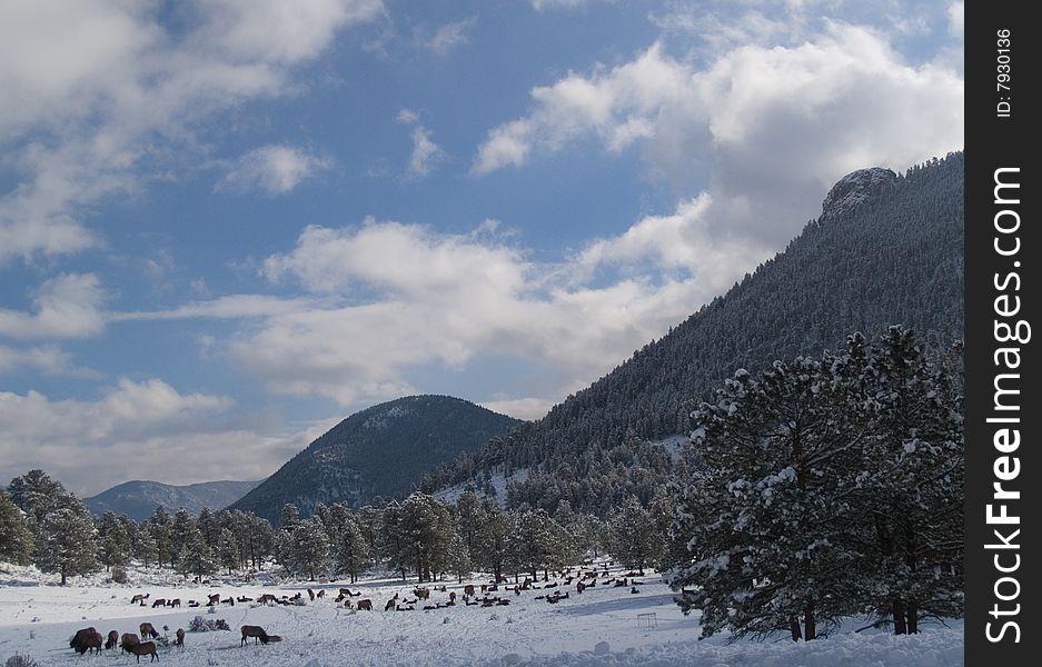 Herd on a Winter Mountain