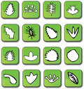 Free Green Glossy Leaf Icons Stock Photos - 7947983
