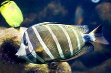 Free Tropical Fish 30 Stock Photo - 7942270