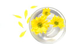 Free Yellow Flowers In Water And Petals Royalty Free Stock Image - 7944606