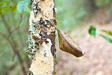 Free Leaf Stuck In Tree Bark Royalty Free Stock Images - 7944889