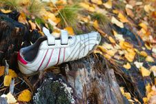 Free Shoe Forgotten In The Woods Stock Images - 7946654
