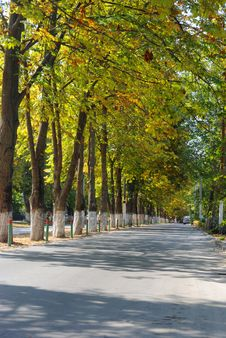 Free Tree Avenue Royalty Free Stock Images - 7948549