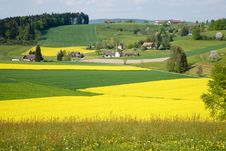 Free Canola Field Stock Photography - 7948852