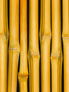 Free Trunks A Tree A Bamboo Royalty Free Stock Photography - 7956307