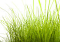 Free Green Grass Isolated On White Stock Photos - 7957193