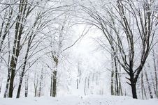 Free Winter Forest Stock Photography - 7950002