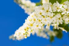 Free Beauty Spring Flowers Stock Photo - 7951050