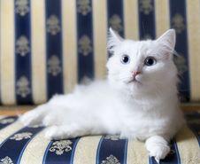 White Cat Lying On Beautiful Sofa Stock Photo