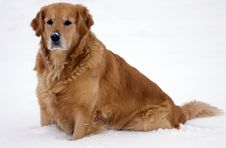 Free Dog In The Snow. Stock Photography - 7951382