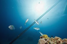 Free Ocean And Fish Royalty Free Stock Image - 7954236