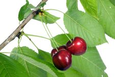 Free Three Cherries With Leaves. Royalty Free Stock Images - 7955009