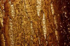 Free Wood Bark Stock Image - 7956651