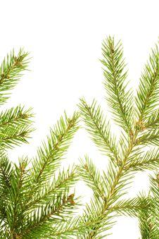 Free Fir Branch Stock Image - 7957081