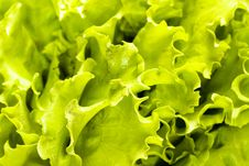 Free Salad Leaves Background Stock Photos - 7957143