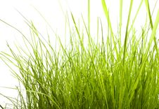 Free Green Grass Isolated On White Stock Photos - 7957193