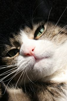 Free Cat`s Close-up Royalty Free Stock Images - 7957219