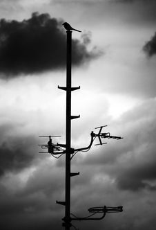 Free The Bird On The Antenna Stock Photos - 7957243