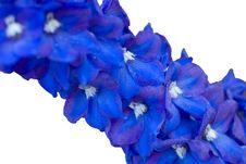 Indigo Flowers Stock Photography