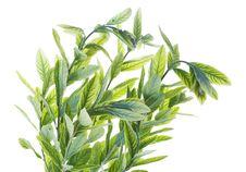 Free Plant Stock Image - 7957551