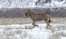 Free Donkey Royalty Free Stock Photo - 7957585