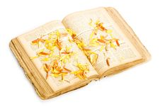 Free Book With Flower Petals Stock Photography - 7957652