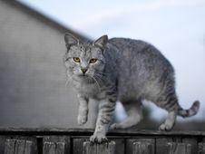 Free Gray Cat Stock Image - 7957671