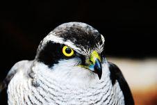 Free Hawk Stock Images - 7957774