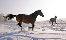Free Horses Royalty Free Stock Photography - 7957897