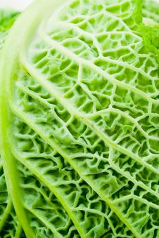 Free Close Up Of Cabbage Leaf Royalty Free Stock Photo - 7957985
