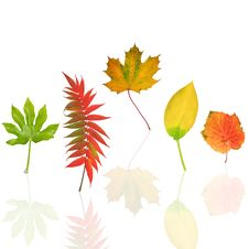 Dancing Leaves Of Autumn Stock Photo