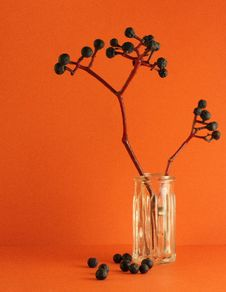 Free Berries On An Orange Background Royalty Free Stock Photography - 7958417