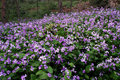 Free Violet Flower Stock Image - 7967021