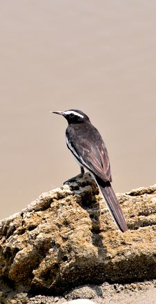 Free Black Bird Stock Image - 7960191