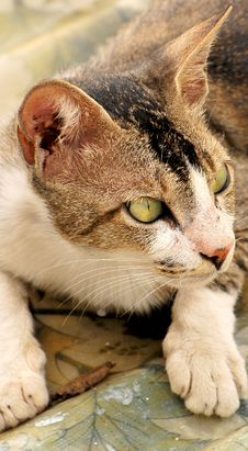 Free Cat Stock Photography - 7960332