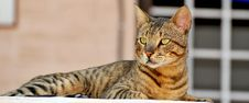 Free Cat Royalty Free Stock Photos - 7960418