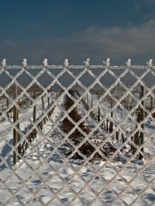 Free Vineyard In Winter 3 Stock Photos - 7962053