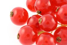 Free Red Gooseberries Royalty Free Stock Images - 7962219
