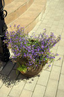 Free Garden Royalty Free Stock Image - 7962556