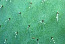 Free Cactus Royalty Free Stock Image - 7962796