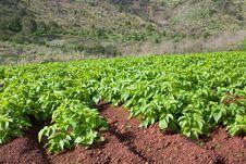 Plants Stock Photo