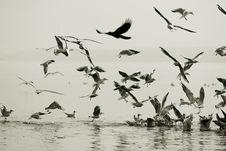 Free Seagulls Stock Photos - 7964493