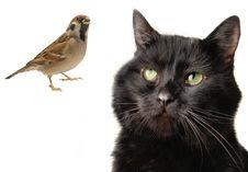 Free Cat Stock Photo - 7964700