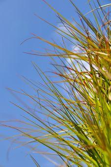 Free Spiky Grass Stock Photo - 7965190